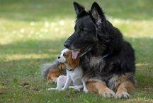4 LEGGED FURRY FRIENDS / All animals / by Dina Morris