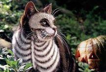 Autumn - Halloween / Halloween decor and costumes