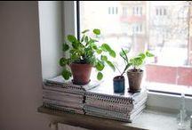 Windowsills / by Victoria Pichel