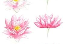 Anything Lotus!
