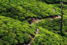 Tea | Travel / We will travel for tea. Ideas for tea travel