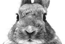 Lièvres & lapins...