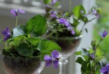 Blossoms/ Table Arrangements