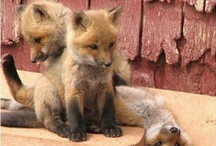 Adorable Animals / by Nichole Herrin