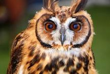 Owls~Are Beautiful / #owls #beautifulowls / by AnGeL JoHnTiNg BrOwN