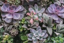 succulents! [seven-degrees] / [seven-degrees] is known for it's succulent landscape. We are constantly changing our scenery. Come by and check it out!