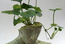 Potted plants / All I like