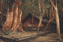 Árboles ✽  / Estos son todos los árboles que crecen en Villa la Angostura / by Puerto Arauco