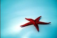 under the sea / Unter dem Meer