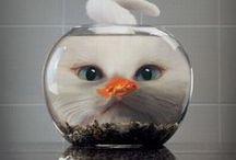 Cats etc. / by Sandra Abbott
