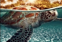 look at that turtle go, bro