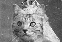 CATastic / #cats #feline #caturday