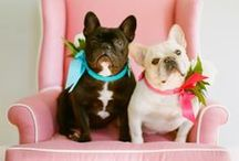 It's a dog's life / cute and cuddly furry friends!