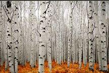 AW-tumn / Autumn, Fall, Thanksgiving, October