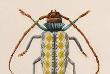 mosca bugs/ Käfer