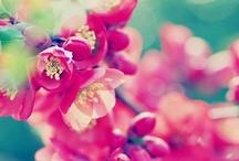 Raspberry / by Suzy Stichbury