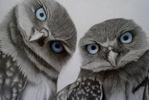 Birdies / by Pam Morris
