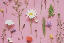 Fleurs et végétation / Flowers, plants & leaves / by Marie D
