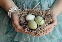 Nests and Eggs / Bird nest; nest collection; bird eggs / by Pat Dorraj