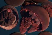 underwater* / i wanna live in a bathysphere.