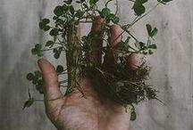 Botanicals and Herbals / by Bettina .