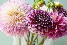 Garden Party / Feminine, Floral, Classic Springtime