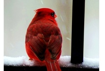 Birds / by Sharon Thrash