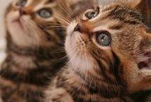 Kitties / by Claire Kapustka