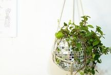 Decor: Hanging Plants