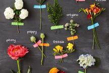 Flowers / by Angela Choi