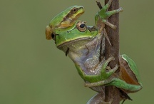 Frogs / by Catherine Manoli