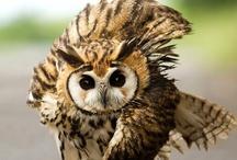 Owls / by Catherine Manoli
