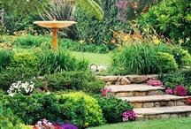 My dream garden / by Elizabeth Haycock