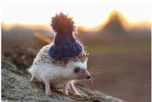 We ♥ Hedgehogs