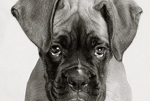 boxers and other cute creatures / by Tonja Meyer