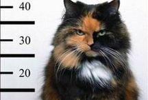Purrr Babies / Have 4 rescue cats,  Abbey, Merlin, Cody, & Wally / by P. Hawk