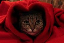 Kitticus Caticus / Kitties / by Lauren Butcher