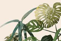 ART / Botanical / #art #botanical #plants #pint #illustration #aquarell #design