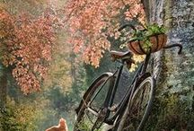 bIcYcLeS / Who would have thought I could found beauty in a bicycle. . . hahaha js