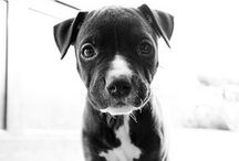 animals wanimals / Everything for my two loves: horse and dog. Cute Puppies, Horses, Pitties, Homemade Dog Treat recipes, etc.