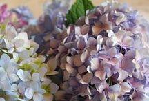 Flowers / by Amalin