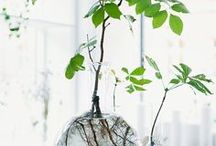 Container ideas - garden containers / Unique and creative container ideas for the average gardener.  www.woodendeckle.com