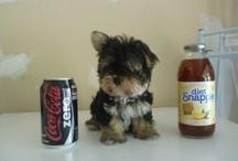 Drinks Kid Friendly / by Tamera Howell