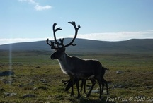 Wildlife in Sweden / by VisitSweden - Pins of Sweden