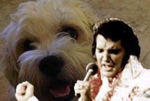 Elvis Presley / by Tamera Howell