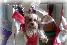 Christmas Greetings / by Tamera Howell