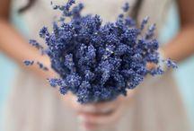 floral . BRIDAL BOUQUET / by Denise Mares