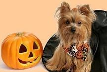 Halloween Greetings / by Tamera Howell