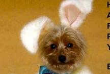 Easter Greetings / by Tamera Howell