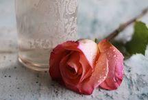 floral . ROSE / by Denise Mares